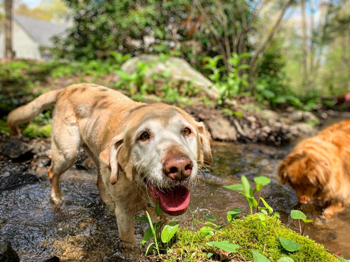 Dog hiking adventures and training in Canton, MA and surrounding areas. Find out why our dog hiking beats typical dog walks around the neighborhood!