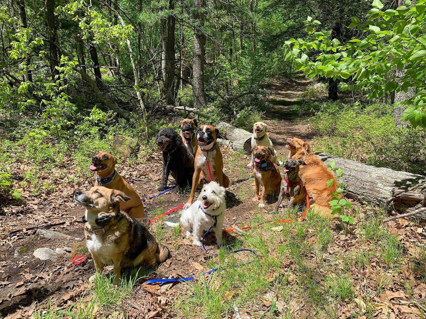 Dog hiking service and trail training in Canton, MA